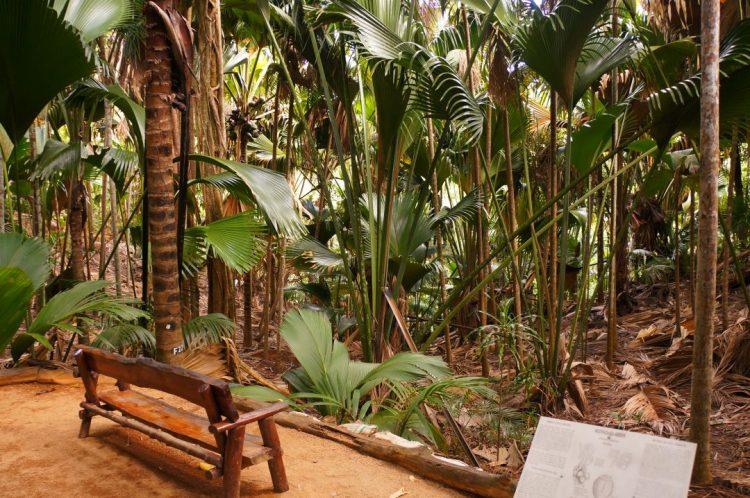 Vallée de Mai Ormanı