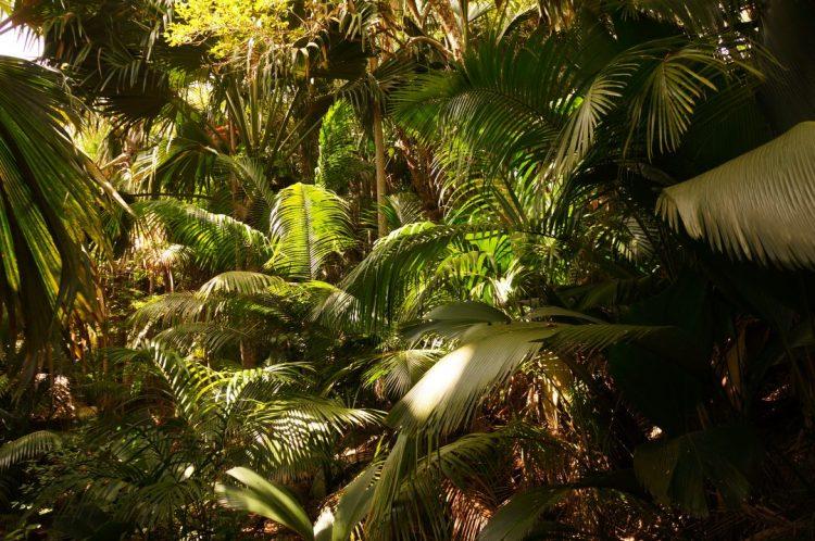 Seyşeller'in tropik ormanları