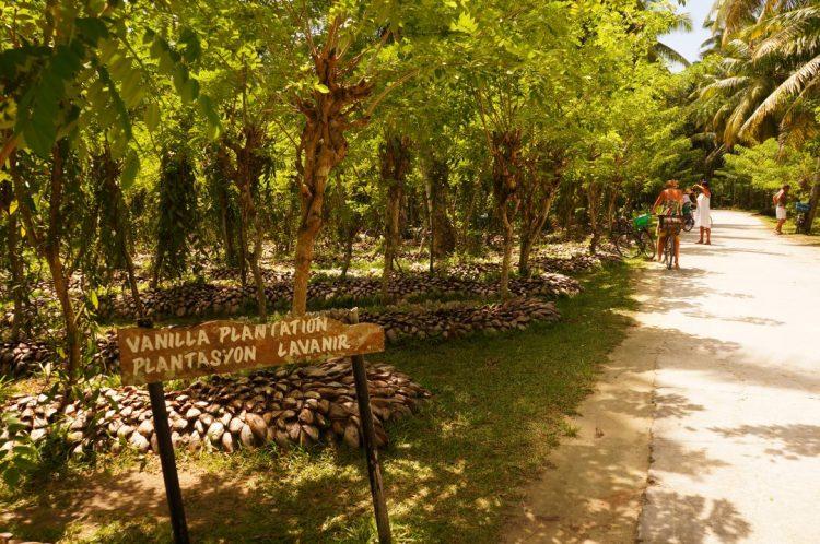 Vanilya bahçeleri